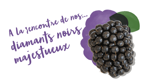 A la rencontre de nos<br>noirs majestueux<br>diamants